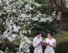 Bần thần trước sắc xuân đẹp đến nao lòng ở Trung Quốc