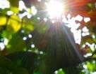 Hà Nội trời hửng nắng, nhiệt độ cao nhất 21 độ C