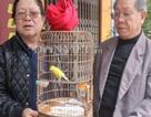 Nuôi con độc lạ: Hái ra tiền nhờ nuôi yến cảnh- loài chim quý tộc