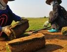 Nghề lạ: Thực hư chuyện trồng cỏ kiếm bộn tiền ở Điền Xá