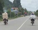 500.000 tấn đường thẩm lậu vào Việt Nam bằng đường nào?