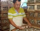 Giá trứng cút rớt thảm còn 200 đồng/quả, 20.000 đồng mua được cả trăm quả