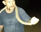 Nướng sống rắn độc trên bếp và cái kết đáng sợ
