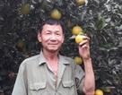 Lão nông lãi gần 1 tỷ đồng/năm nhờ kéo dài vụ cam thêm 2 tháng