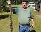 Mỹ: Thấy rắn độc bò vào nhà, lập tức rút súng ra bắn chết