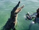 Liều lĩnh bơi sát cá sấu 3m để chụp ảnh cho nét