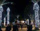 """Cây trang trí Giáng sinh giống """"của quý"""" gây sốt ở Italia"""