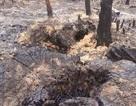 Bắc Giang: Hơn 50 ha rừng bị đốt phá, công ty lâm nghiệp bị phê bình!