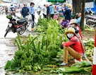 Chuối Tết mất mùa, giá thấp, nông dân kém vui