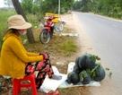 Dưa hấu ế ẩm, nông dân đưa ra đường ngồi bán