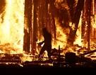 Kinh hoàng người đàn ông lao vào đám lửa trong lễ hội