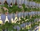 """Muôn kiểu trồng rau """"không đụng hàng"""" của """"nông dân phố"""""""