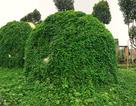 5 ngôi nhà kỳ dị, độc đáo bậc nhất Hà Nội