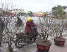 Thời tiết đẹp, người Hà Nội háo hức xuống phố mua đào