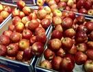 Táo Pháp rẻ như rau chợ, dân Việt sính ngoại ăn quả lừa