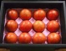 Bơ ngâm hóa chất lừa nhau ăn, quả vải xịn dành bán sang Nhật