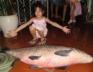 Cá trắm đen khổng lồ hiếm có: Mỗi lần xuất hiện gây xôn xao