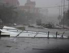 Phát quang cây đổ sau bão, một trưởng thôn tử nạn