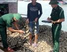 Phát hiện gần 10 tấn hàu giống nhập lậu từ Trung Quốc