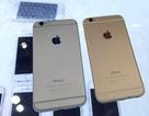 """iPhone khóa mạng bất ngờ """"ế ẩm"""", người dùng đi săn iPhone quốc tế"""
