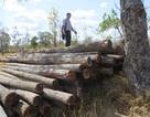Thủ tướng yêu cầu kiểm điểm trách nhiệm vụ phá rừng tại Đắk Lắk