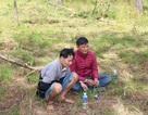 Bắt 2 đối tượng phá rừng thông để lấy đất bán
