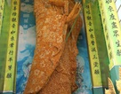Tượng Phật bằng hoa bất tử ở Đà Lạt được xác lập kỷ lục thế giới