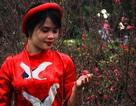 Vượt nghìn cây số, đào Nhật Tân hút khách đất võ Bình Định