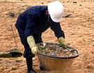 Sàng cát để thu gom dầu và rác thải tấp vào bờ biển