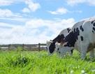 Bước tiến mới trong lĩnh vực organic của ngành sữa