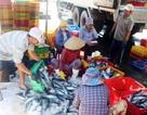 Ngư dân trúng mẻ cá ngừ sọc dưa bán hơn 700 triệu đồng