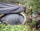 Kiếm hàng tỉ đồng từ nuôi cá hồi trên đỉnh Mẫu Sơn