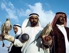 Mua vé máy bay cho... 80 con chim ưng và thú vui xa xỉ của đại gia Ả rập