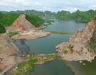 """Vụ xẻ thịt núi đá tại vịnh Hạ Long: Trồng """"bù"""" 1.000 cây keo"""