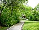 Căn hộ cao cấp EcoXuân đi đầu xu hướng sống xanh tại Bắc Sài Gòn