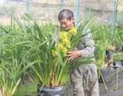 """""""Lão nông"""" lãi hơn nửa tỷ mỗi năm từ trồng địa lan"""