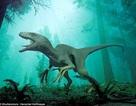 Tìm thấy phần xác ướp khá nguyên vẹn giống khủng long