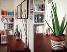 5 loại cây cảnh trồng trong nhà mang lại tài lộc và sức khỏe