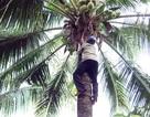 Người đàn ông 50 năm mưu sinh bằng nghề trèo dừa