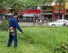 Hà Nội ấn định cụ thể số lần cắt cỏ, tưới nước cho cỏ...
