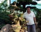 Vườn mai cổ thụ tiền tỷ bán tết ở Sài Gòn