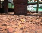 Tàu vỏ thép hơn chục tỷ nguy cơ thành đống sắt vụn do đóng thép Trung Quốc