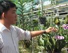 Chàng trai miền Tây sở hữu 150 loài hoa lan rừng độc lạ trên thế giới