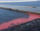 Dải nước màu đỏ ở biển Hà Tĩnh do hiện tượng tảo nở hoa