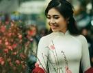 Hoa khôi sinh viên Hà thành khoe sắc trong bộ ảnh đón Tết