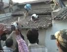 Kinh hoàng cảnh báo hoang tấn công người ở Ấn Độ