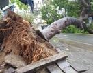 Nha Trang thiệt hại nặng nề nhất trong vòng 20 năm qua