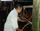 Xử phạt hàng loạt cơ sở bơm nước vào bò trước khi giết mổ