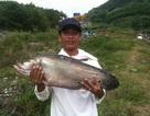 Một cần thủ câu được cá thác lác nặng tới 7 kg