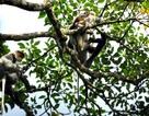 Tiếng kêu cứu từ Vườn Quốc gia Kon Ka Kinh